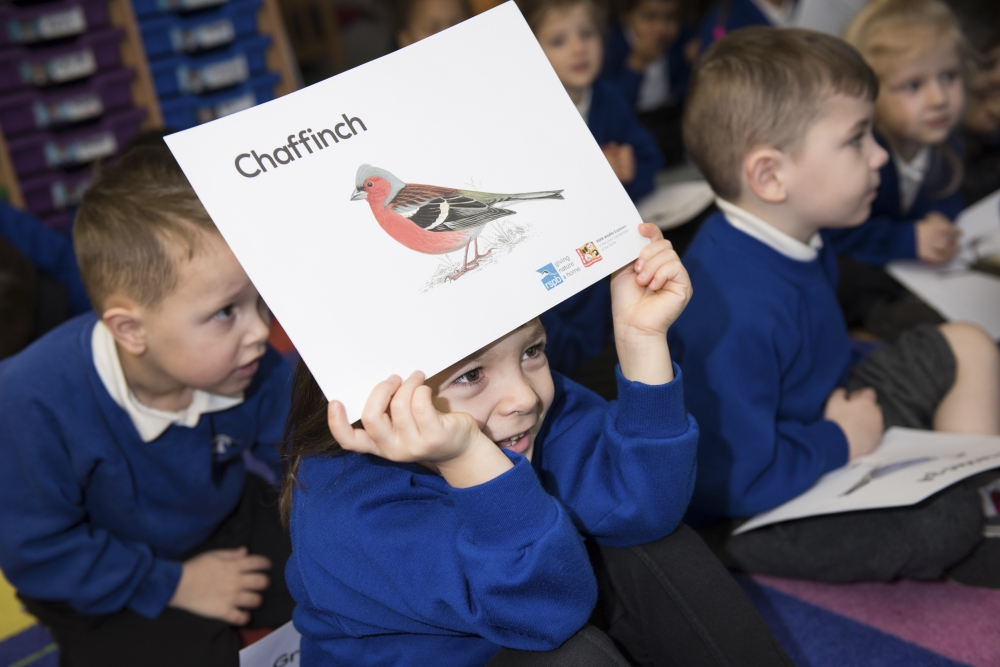 Free RSPB school activity takes flight